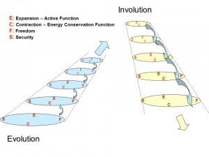 Spiral Evolution